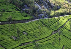srilanka-tour-packages